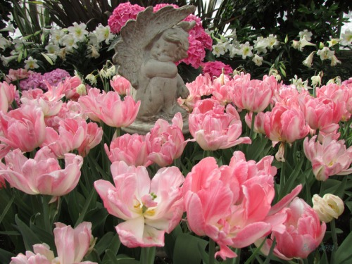 Enchanted Tulips (22)