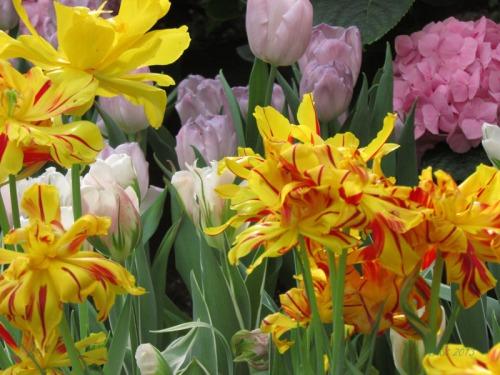 Enchanted Tulips (24)
