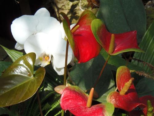 Orchids 2013 (15)