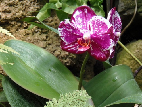 Orchids 2013 (16)