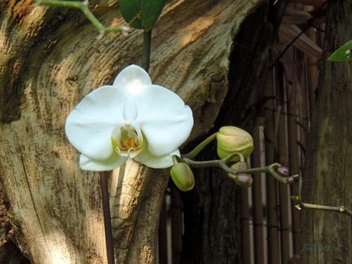 Orchids 2013 (19)