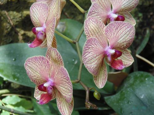 Orchids 2013 (7)