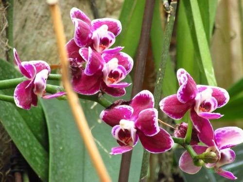Orchids 2013 (8)
