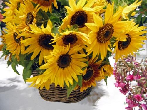Sunshine in a Basket (1)