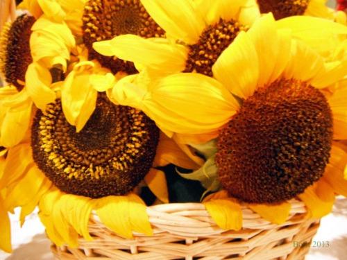 Sunshine in a Basket (14)