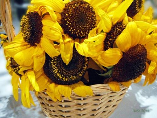 Sunshine in a Basket (15)