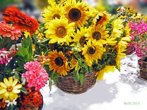 Sunshine in a Basket (2)