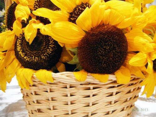 Sunshine in a Basket (3)