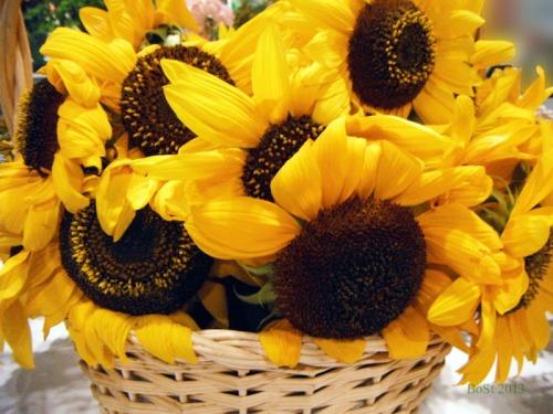 Sunshine in a Basket (4)
