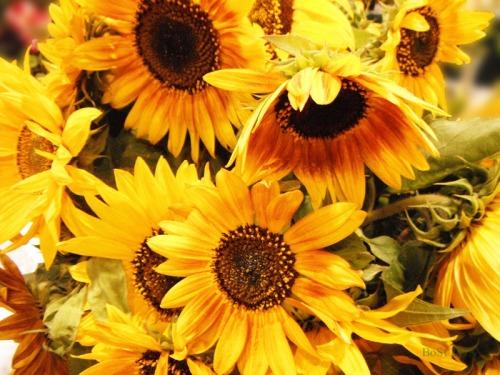 Sunshine in a Basket (6)