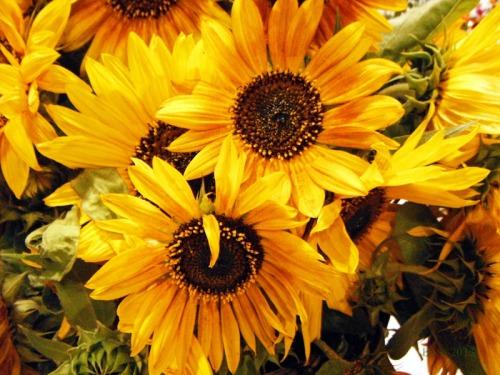 Sunshine in a Basket (8)