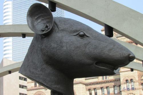 01 Rat