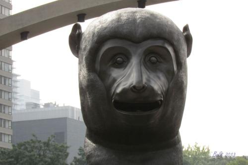 17 Monkey