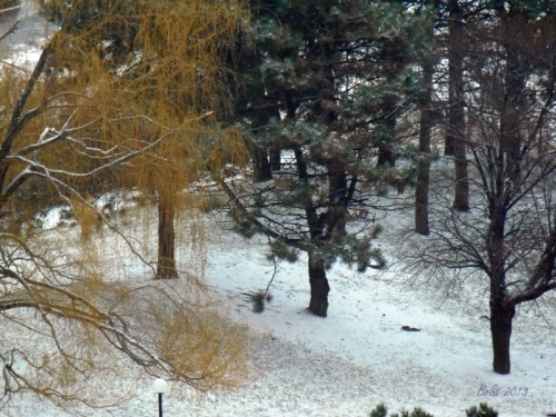 4-Winter 2013 (6)