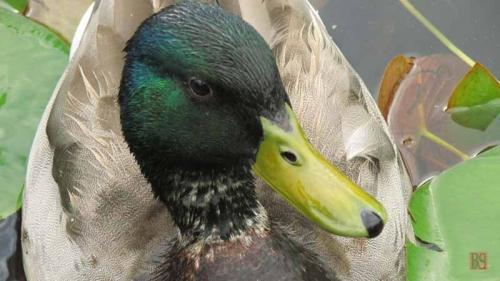 Duck Delight Blog (1)