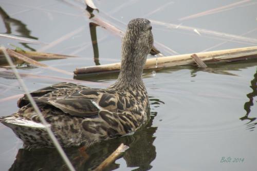 Duck Delight Blog (11)