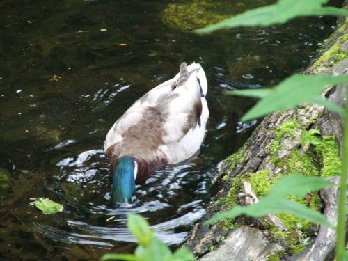 Duck Delight Blog (13)