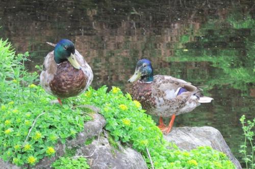 Duck Delight Blog (14)