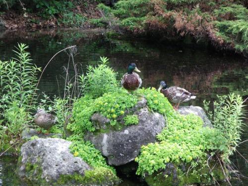 Duck Delight Blog (17)