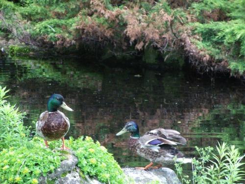 Duck Delight Blog (22)