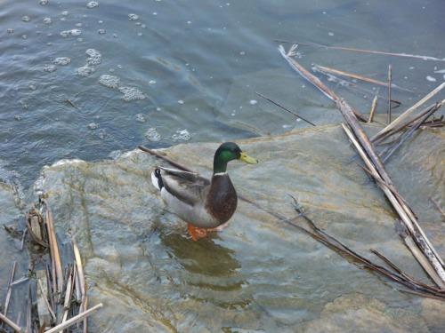 Duck Delight Blog (23)