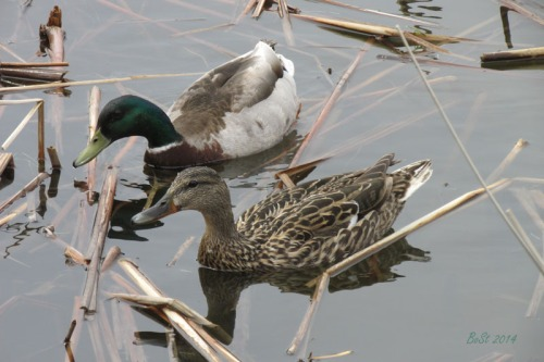 Duck Delight Blog (3)
