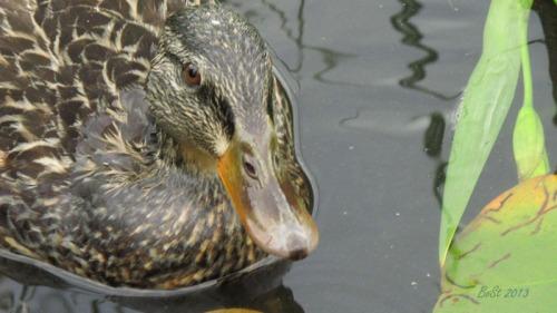 Duck Delight Blog (5)