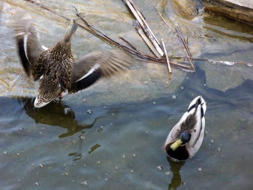 Duck Delight Blog (8)