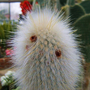 02- Prickly1