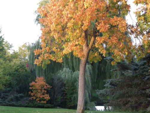 Sel of Autumn (12)
