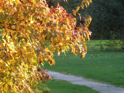 Sel of Autumn (8)