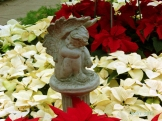 Poinsettia 2015 (18)