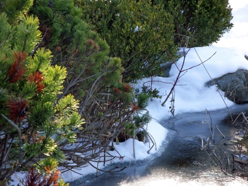Pics of Spring Thaw (11)