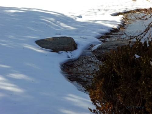 Pics of Spring Thaw (13)