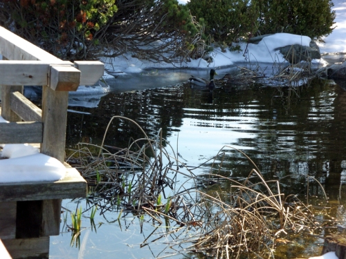 Pics of Spring Thaw (14)