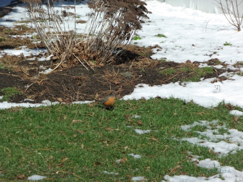 Pics of Spring Thaw (2)