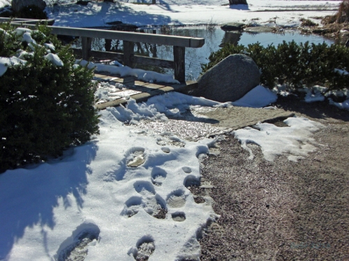 Pics of Spring Thaw (7)