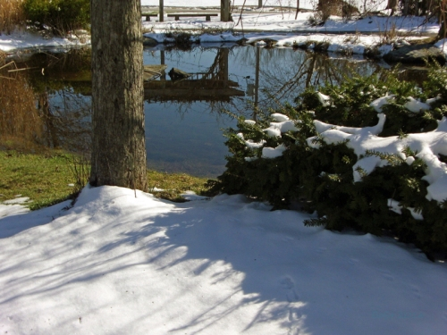 Pics of Spring Thaw (9)