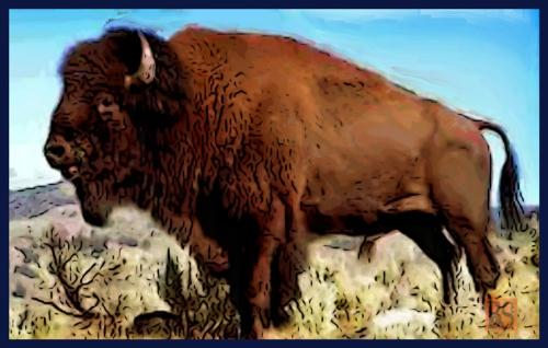 04-Buffalo_Final-Painting800