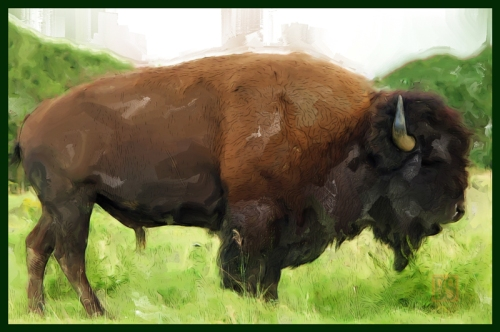 06-Final-_Painting-Of-Buffalo800