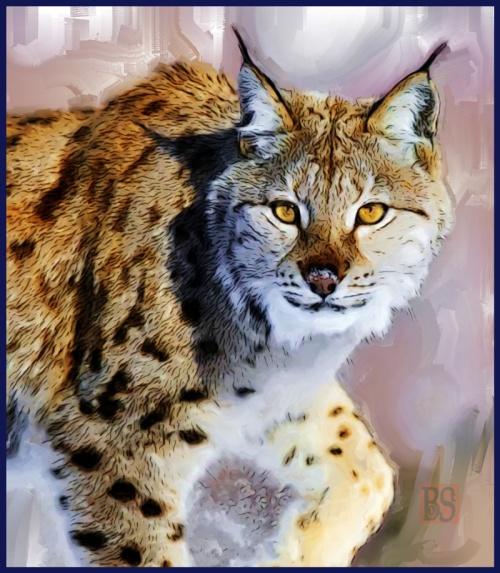 07-Bobcat-3--800-Final_Painting